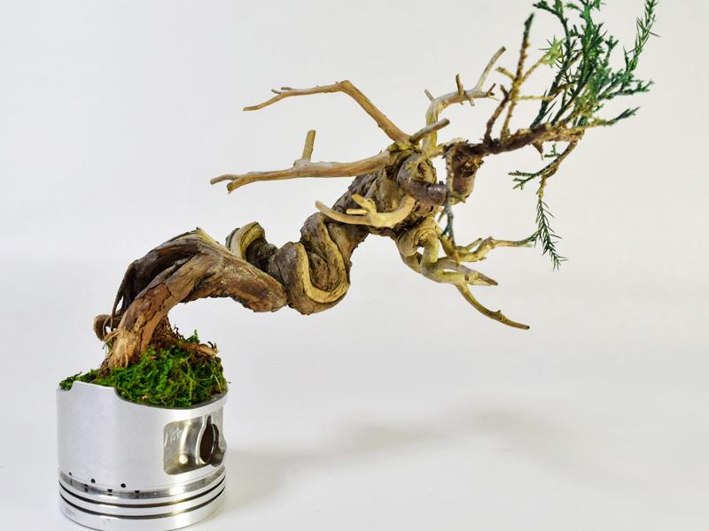 ドライ盆栽の手作り体験教室